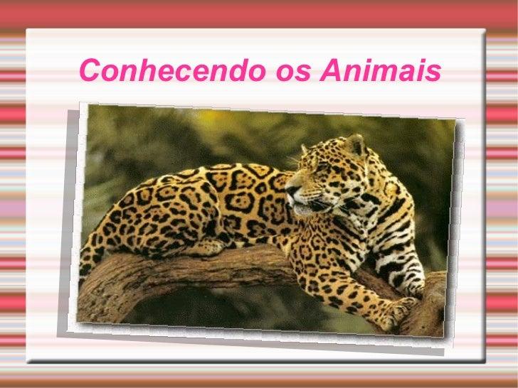 Conhecendo os Animais