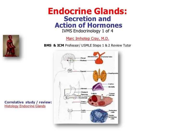 Endocrine Glands:                                Secretion and                              Action of Hormones            ...