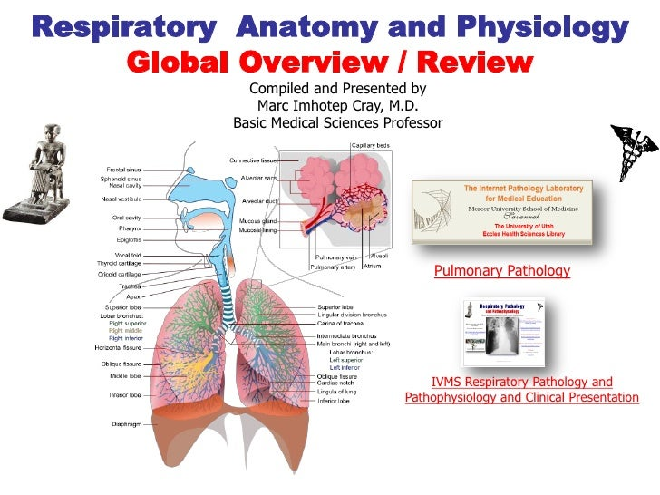 Respiratory Anatomy and Physiology     Global Overview / Review             Compiled and Presented by              Marc Im...