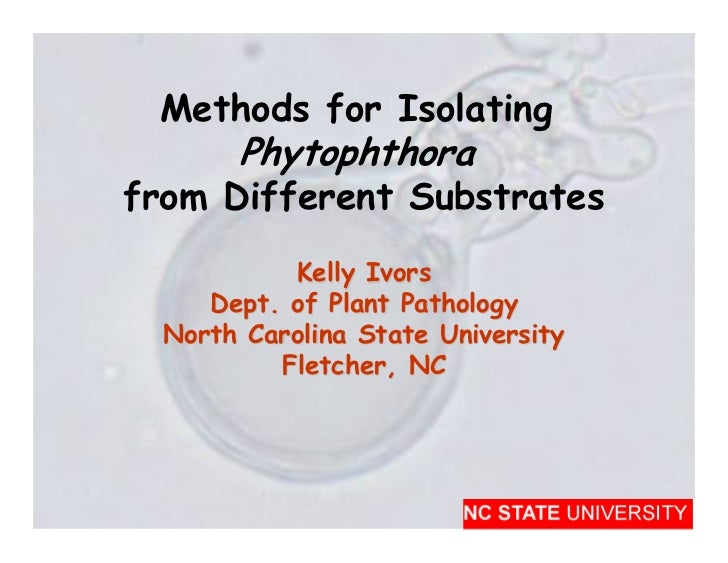 Methods for Isolating        Phytophthora from Different Substrates            Kelly Ivors      Dept. of Plant Pathology  ...