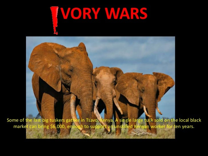 VORY WARSSome of the last big tuskers gather in Tsavo, Kenya. A single large tusk sold on the local black  market can brin...