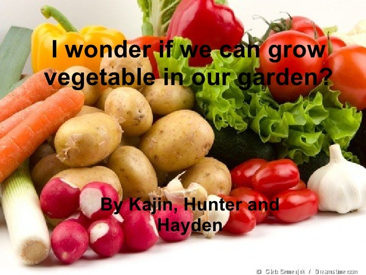 I wonder if we can grow vegetable in our garden? By Kajin, Hunter and Hayden