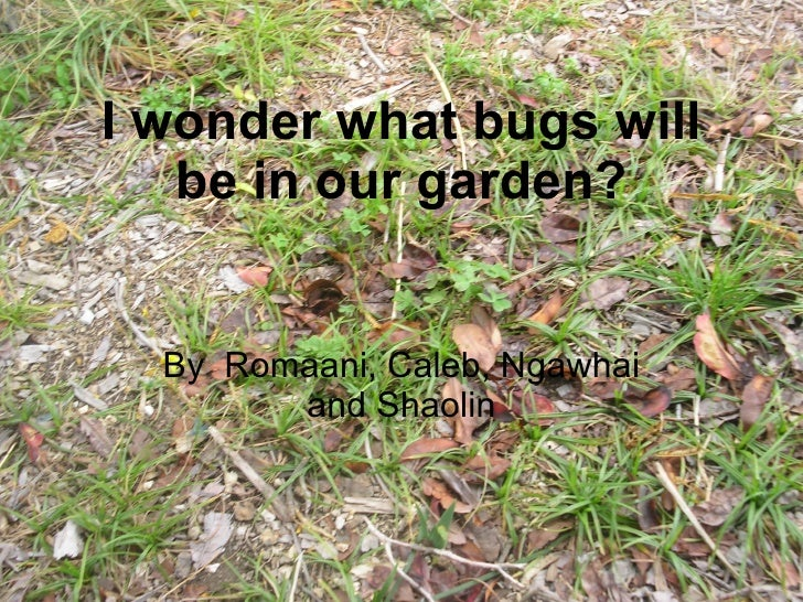 I wonder what bugs will be in our garden? By  Romaani, Caleb, Ngawhai and Shaolin