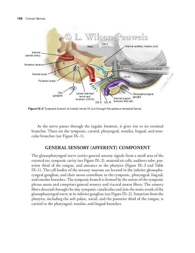 Foramen Lacerum And Carotid Canal