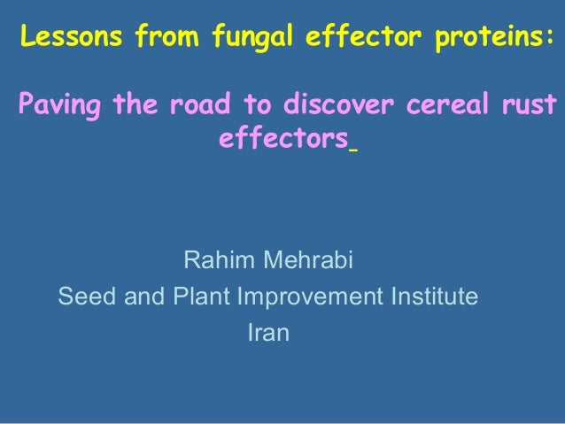 Lessons from fungal effector proteins: Paving the road to discover cereal rust effectors Rahim Mehrabi Seed and Plant Impr...