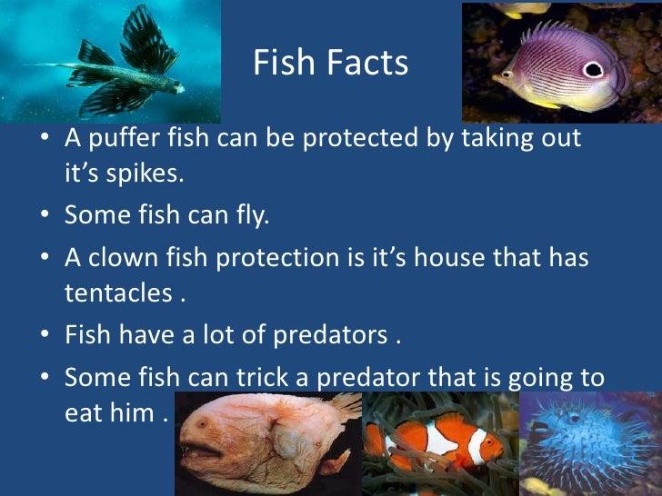 Fish for Puffer fish adaptations