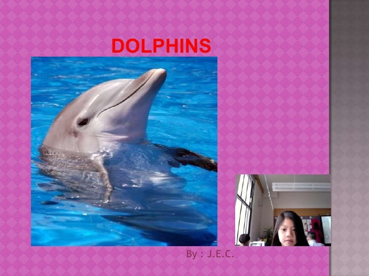Dolphins<br />By : J.E.C.<br />