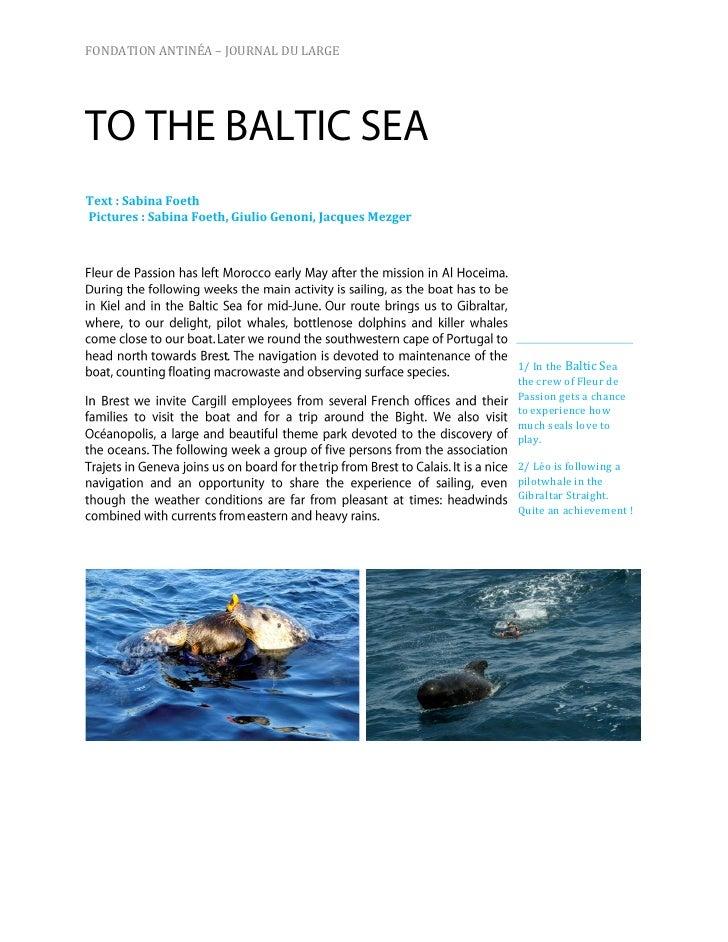 """""""Newsletter"""" Enero 2011 Antinea"""