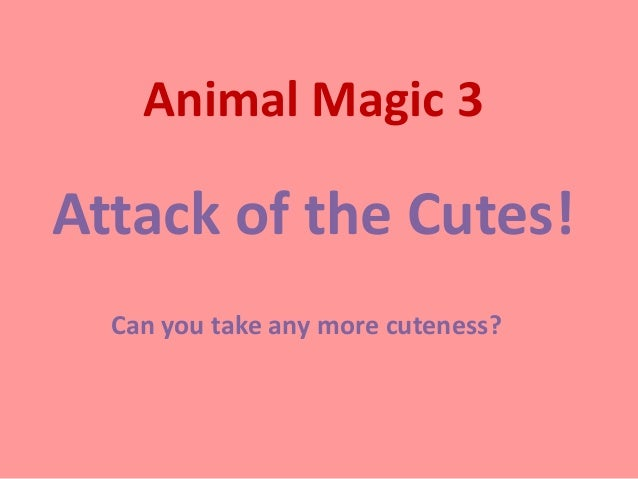 Animal Magic 3Attack of the Cutes!  Can you take any more cuteness?