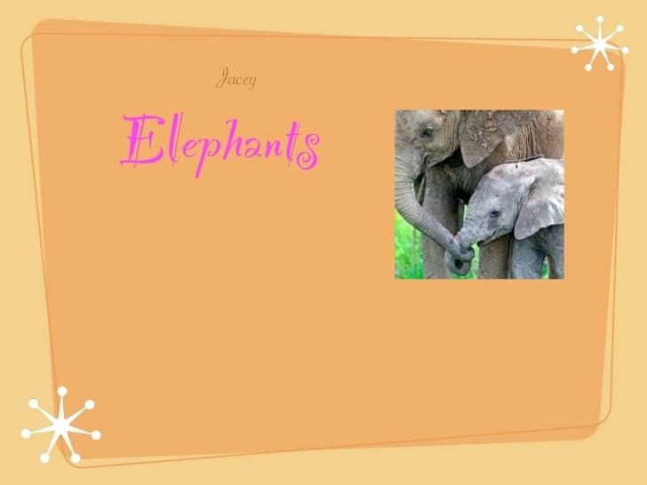 Elephants by Jacey