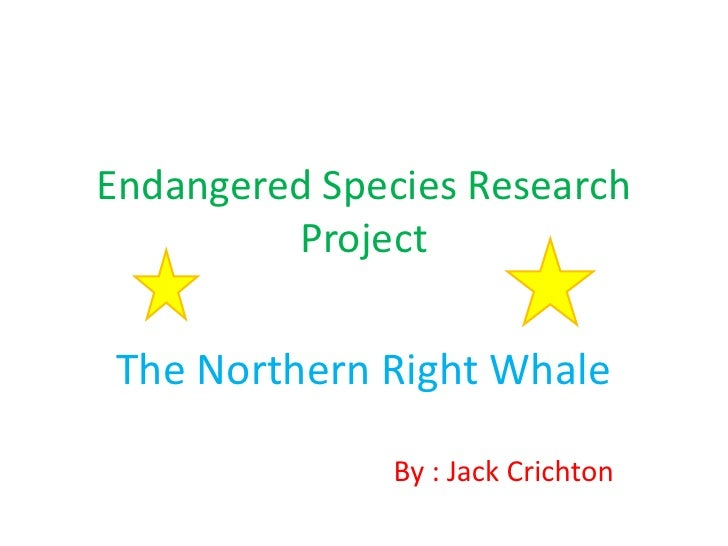 Endangered Species Research         ProjectThe Northern Right Whale               By : Jack Crichton
