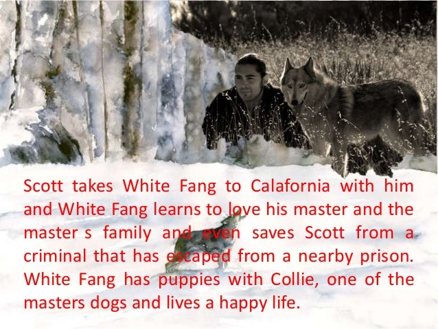 white fang summary 'white fang' review: jack london's classic story is vividly  while the film  mostly adheres to the plot laid out in london's 1906 novel,.