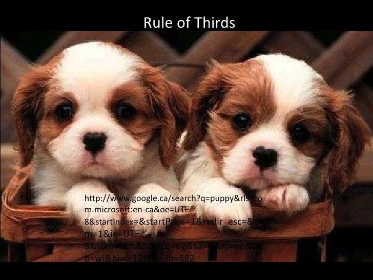 Rule of Thirdshttp://www.google.ca/search?q=puppy&rls=com.microsoft:en-ca&oe=UTF-8&startIndex=&startPage=1&redir_esc=&um=1...