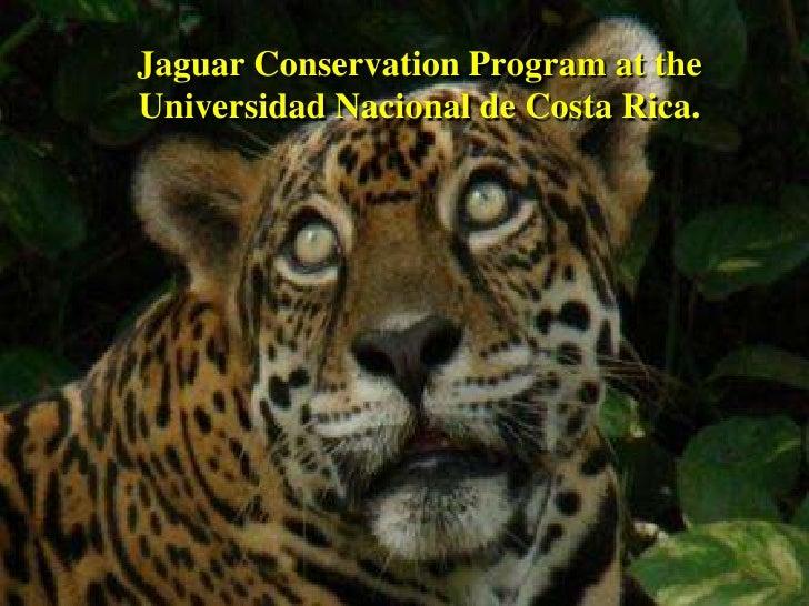 Jaguar ConservationProgram at the Universidad Nacional de Costa Rica.<br />