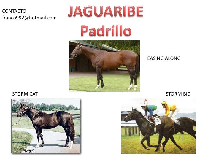 JAGUARIBE<br />Padrillo<br />CONTACTO<br />franco992@hotmail.com<br />EASING ALONG<br />STORM CAT<br />STORM BID<br />