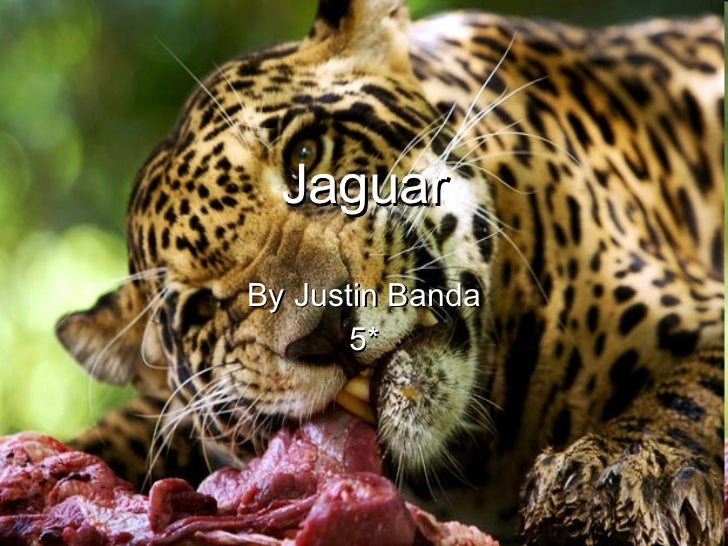 Jaguar By Justin Banda 5*