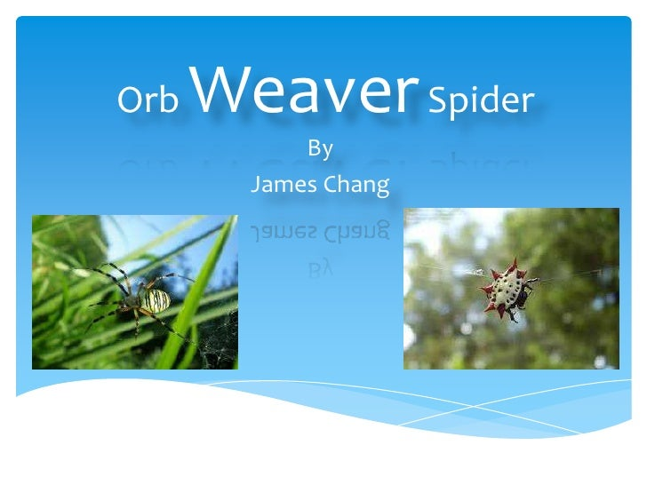 Orb Weaver Spider<br />By <br />James Chang<br />
