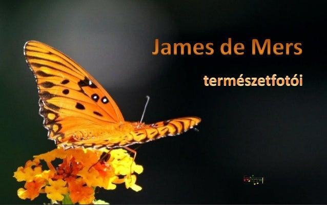 James de Mers természetfotói