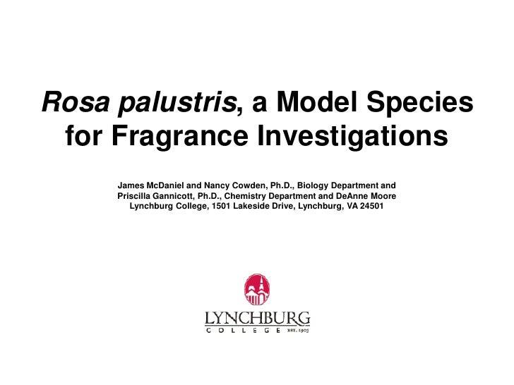 Rosa palustris, a Model Species for Fragrance Investigations     James McDaniel and Nancy Cowden, Ph.D., Biology Departmen...