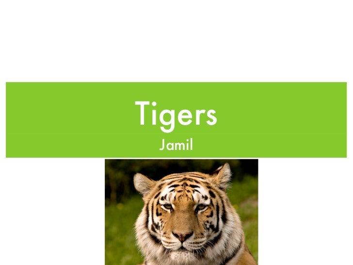 Tigers Jamil