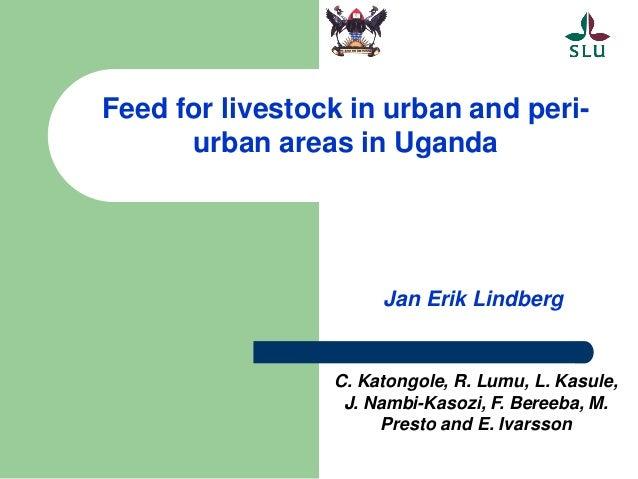 Feed for livestock in urban and peri- urban areas in Uganda Jan Erik Lindberg C. Katongole, R. Lumu, L. Kasule, J. Nambi-K...