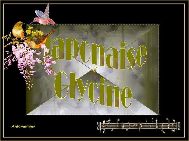 Japonaise  Glycine Automatique