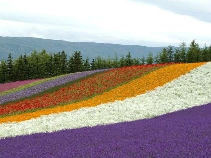 Giappone in primavera