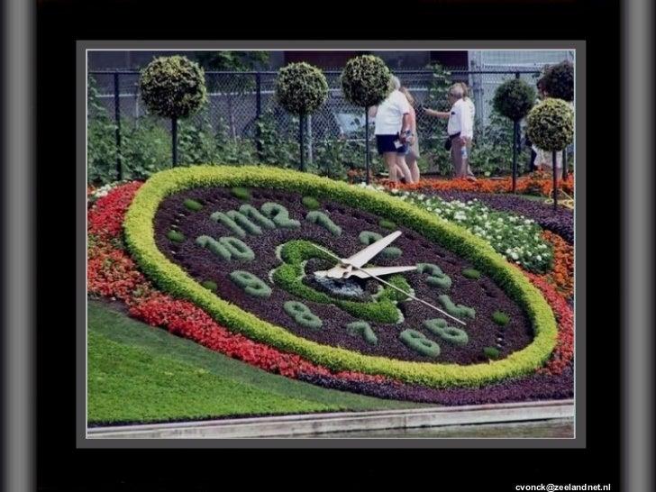 Jardineiro Competente