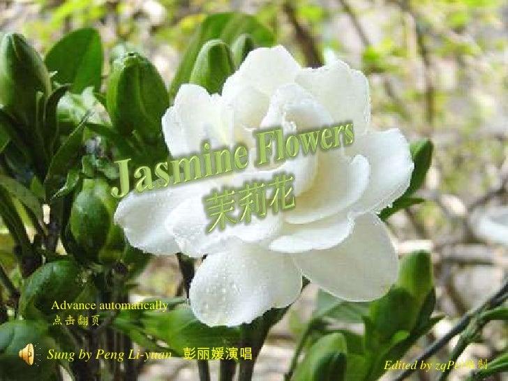 Jasmine Flowers<br />茉莉花<br />Advance automatically<br />点击翻页<br />Sung by Peng Li-yuan彭丽媛演唱<br />Edited by zqPei编制<br />