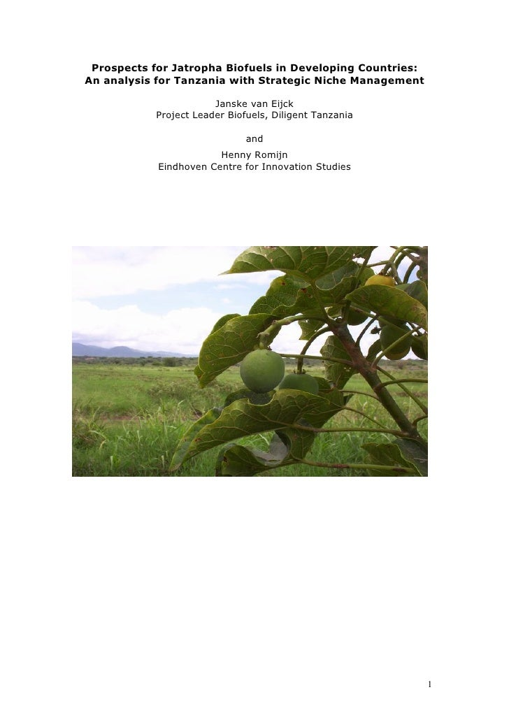 Prospects for Jatropha Biofuels in Developing Countries:An analysis for Tanzania with Strategic Niche Management          ...