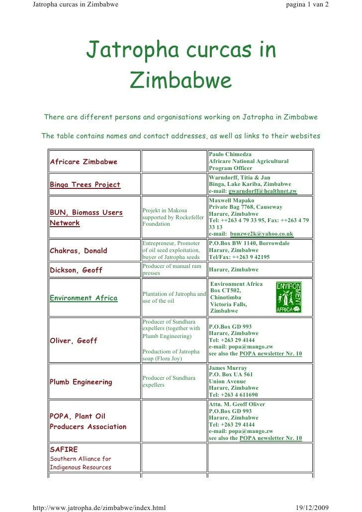 Jatropha Curcas in Zimbabwe