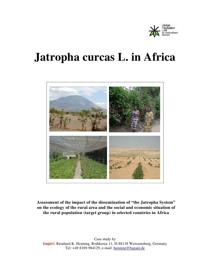 "Jatropha curcas L. in AfricaAssessment of the impact of the dissemination of ""the Jatropha System""on the ecology of the ru..."