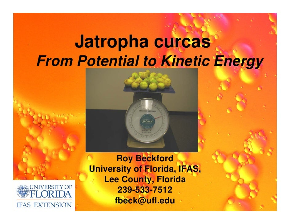 Jatropha curcasFrom Potential to Kinetic Energy              Roy Beckford       University of Florida, IFAS,          Lee ...