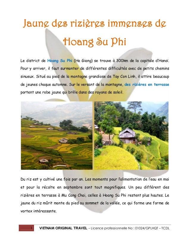 1 VIETNAM ORIGINAL TRAVEL – Licence professionnelle No : 01024/GPLHQT – TCDL Jaune des rizières immenses de Hoang Su Phi L...