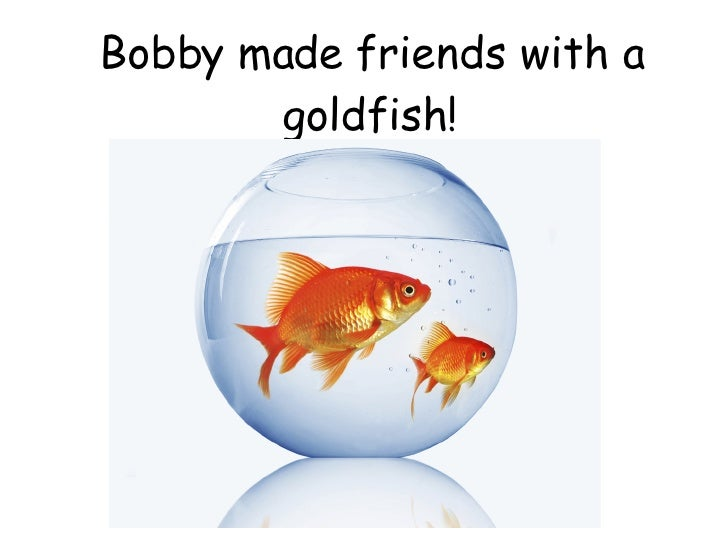 Bobby made friends with a goldfish!