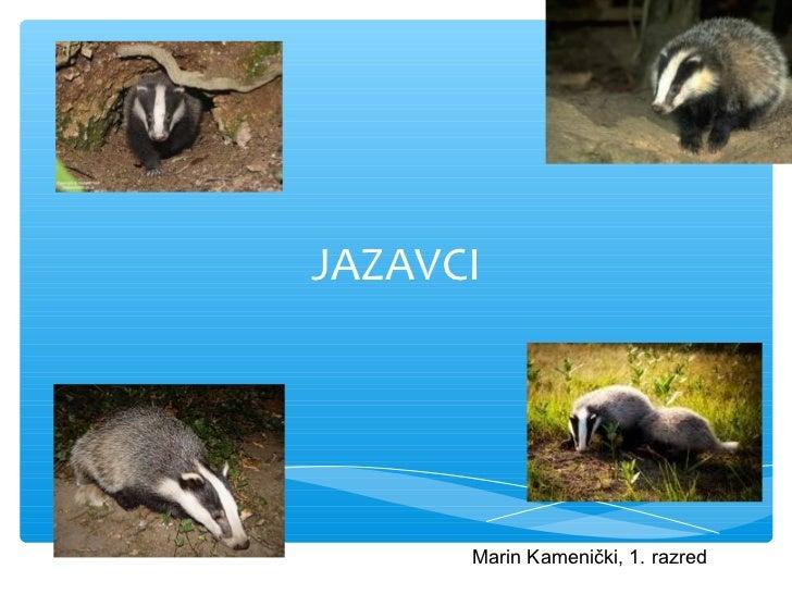 JAZAVCI      Marin Kamenički, 1. razred