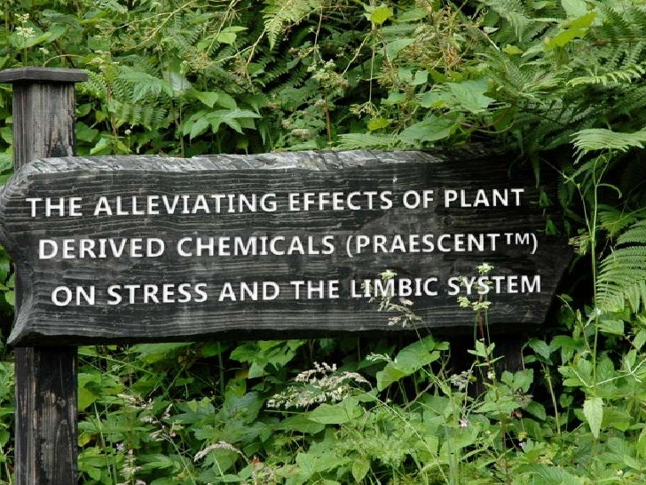 The Alleviating Effects of Plant Derived Chemicals on Stress