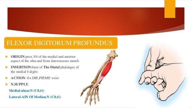 Jc flexor tendon injury, repair & rehabilitaion