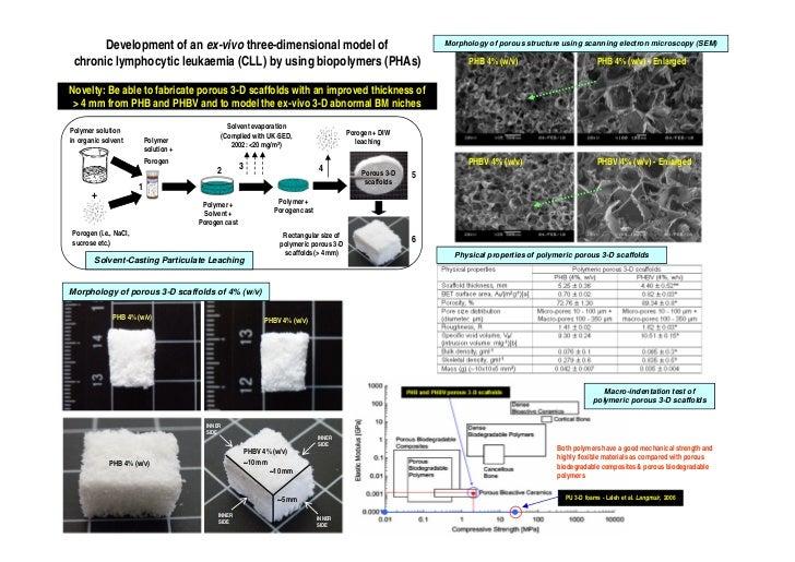 Development of an ex-vivo three-dimensional model of                                                 Morphology of porous ...