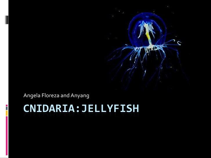Cnidaria:Jellyfish<br />Angela Floreza and Anyang<br />