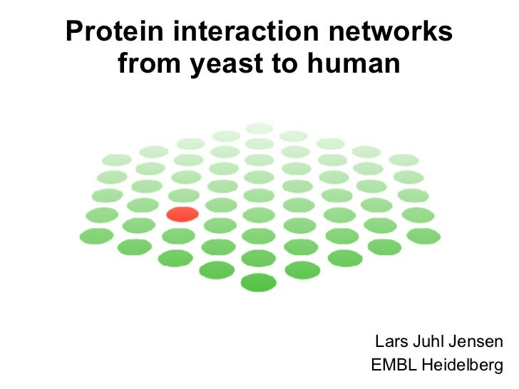 Protein interaction networks from yeast to human Lars Juhl Jensen EMBL Heidelberg