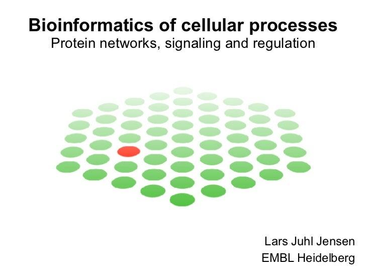 Bioinformatics of cellular processes Protein networks, signaling and regulation Lars Juhl Jensen EMBL Heidelberg