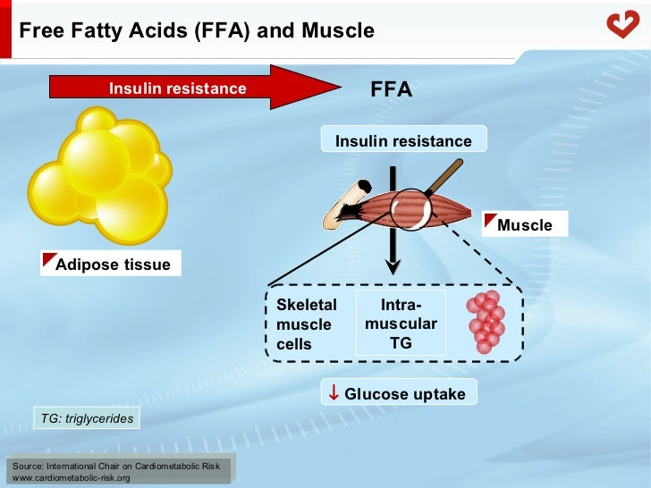 is cholesterol synthesis from acetyl-coa molecules an anabolic reaction