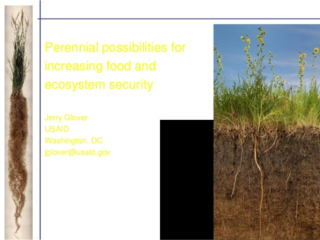 Perennial possibilities for increasing food and ecosystem security