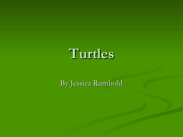 Turtles By Jessica Rumbold