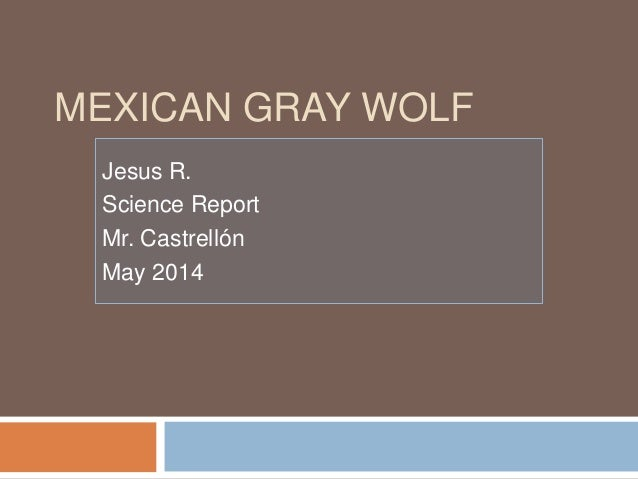 MEXICAN GRAY WOLF Jesus R. Science Report Mr. Castrellón May 2014