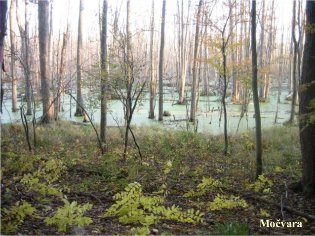 Močvare... - Page 4 Ekosistemi-kopnenih-stajaih-voda-jezera-bare-movare-4-638