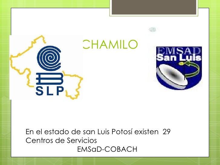 CHAMILOEn el estado de san Luis Potosí existen 29Centros de Servicios              EMSaD-COBACH