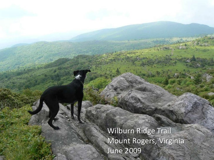 Jimmie's Views - Excerpts of a Hiking Dog's Adventures