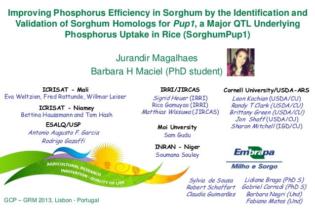 Improving Phosphorus Efficiency in Sorghum by the Identification and Validation of Sorghum Homologs for Pup1, a Major QTL ...